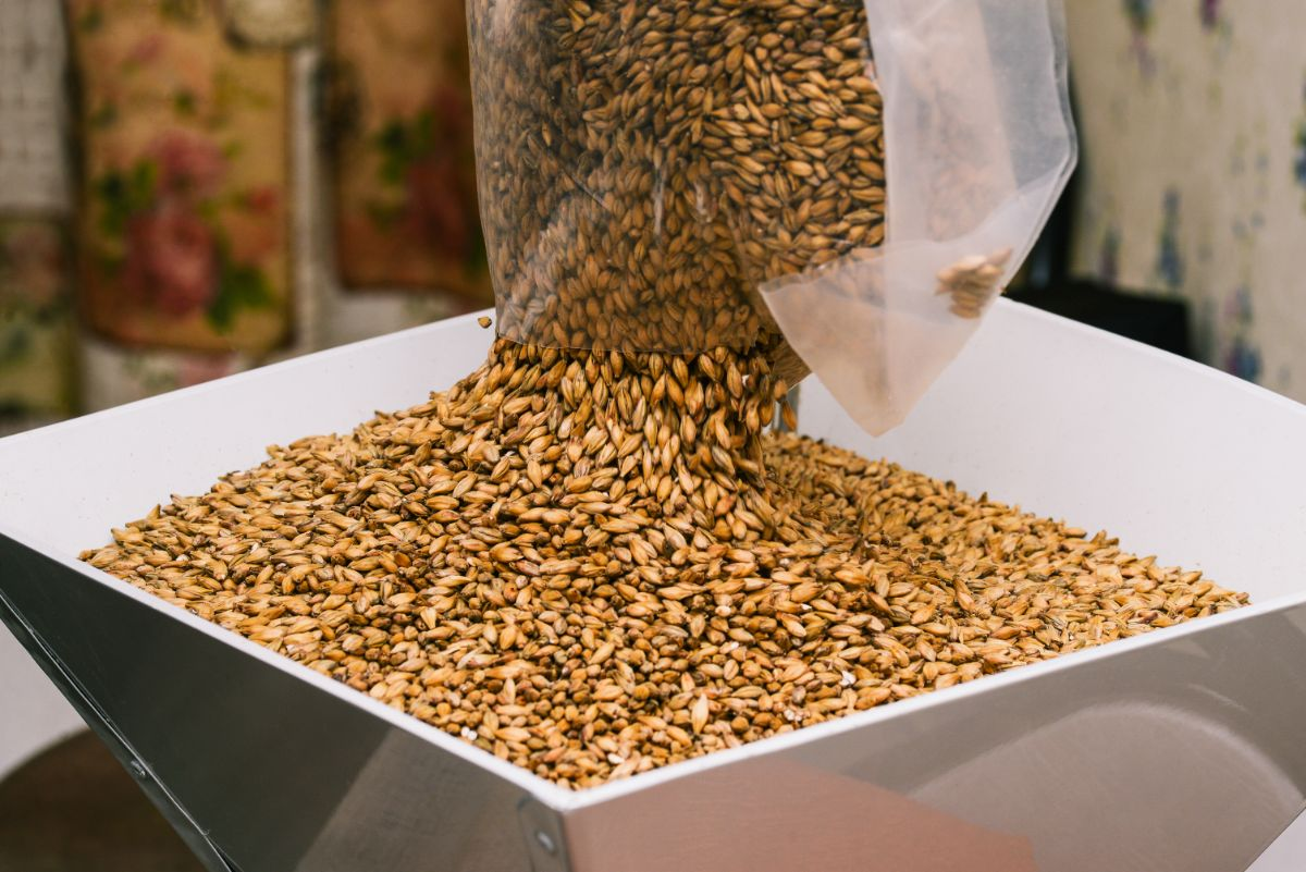 Process of Selecting Grains for Whiskey